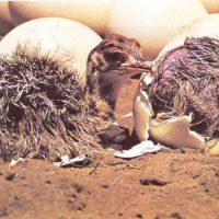 Saliendo del huevo