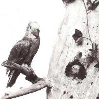 Los nidos de las aves