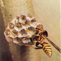 Insectos constructores de viviendas