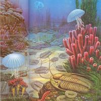 Extraños animales marinos