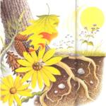 Formas de vida de las plantas