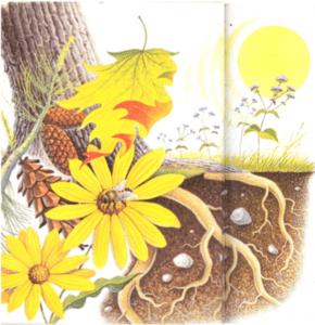 Formes de vie végétale
