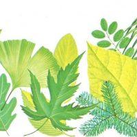 ¿Por qué son verdes las hojas?