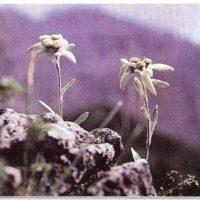 Plantas de comunidades de montaña