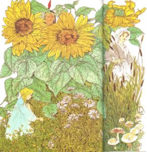 Herbes et fleurs sauvages