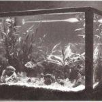 Jardines en cajas de cristal