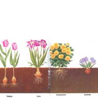Flores que se plantan una sola vez