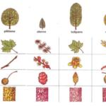 El juego del camino entre árboles (VII)