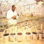 Los agrónomos y las plantas