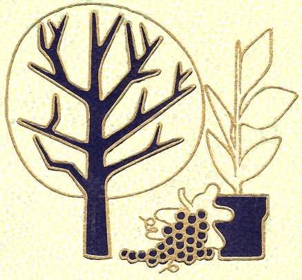 6 – Les plantes