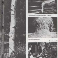 Trees to make toothpicks