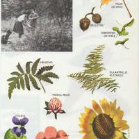 Hojas y flores