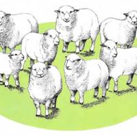 Contar ovejas