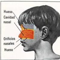 Mi nariz