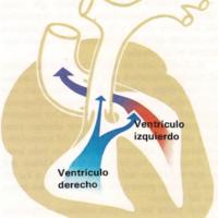 Chupetes, Cianosis, Coagulación, Cólico, Colitis, Coma, Congelación